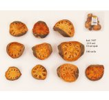 DRIED MELON SLICES 4-8 CM SPECIAL -10 PC /PB