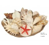 SHELL MIX 1KG IN BASKET 25 CM