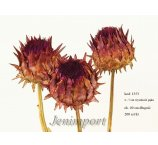 CYNARA SMALL  FLOWER 4-7 CM -H-  NATURAL 40 CM
