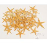 STARFISH 6-8 CM - 50 PC/PB