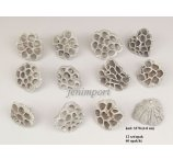 LOTUS 6-8 CM MEDIUM WHITE 12 PC/PB
