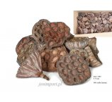 LOTUS 6 - 8 CM MEDIUM LOOSE 900  PC /  CTN