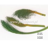 KHEJUR DATE JHAR 25-45CM GREEN 6PC /PACK