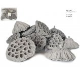 LOTUS + 10 CM EXTRA LARGE GREY 12 PC/PB
