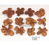 LAND LOTUS 4-6 CM NATURAL 12 PC/PB