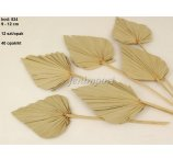 PALM SPEAR 9-12 CM DIAMETER  NATURAL 12 PC/ PB