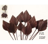 PALM SPEAR 9-12 CM DIAMETER  DARK BROWN  12 PC/ PB