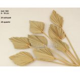 PALM SPEAR MINI 8-10 CM DIAMETER NATURAL 24 PC/ PB