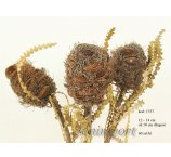 BANKSIA SPECIOSA CONE 12-14 CM WITH HAIR  50 CM ON STEAM